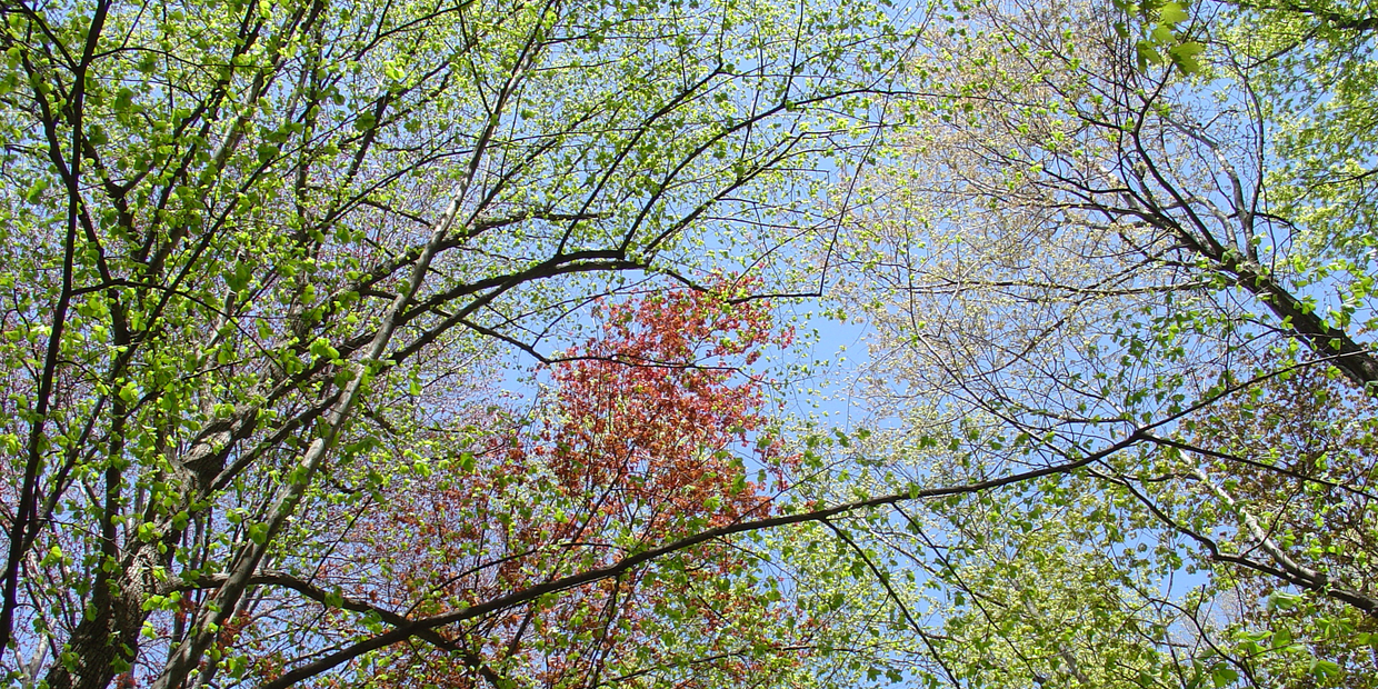 Branches and leaves on a tree