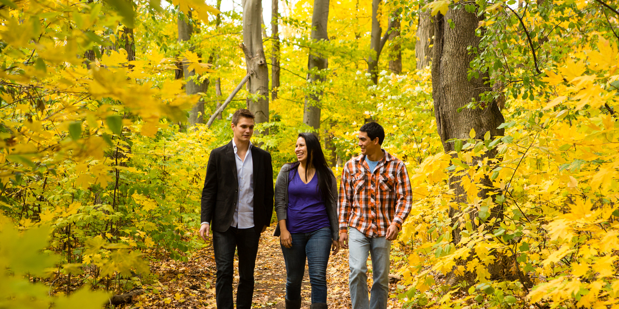three people walking on a path in the woods